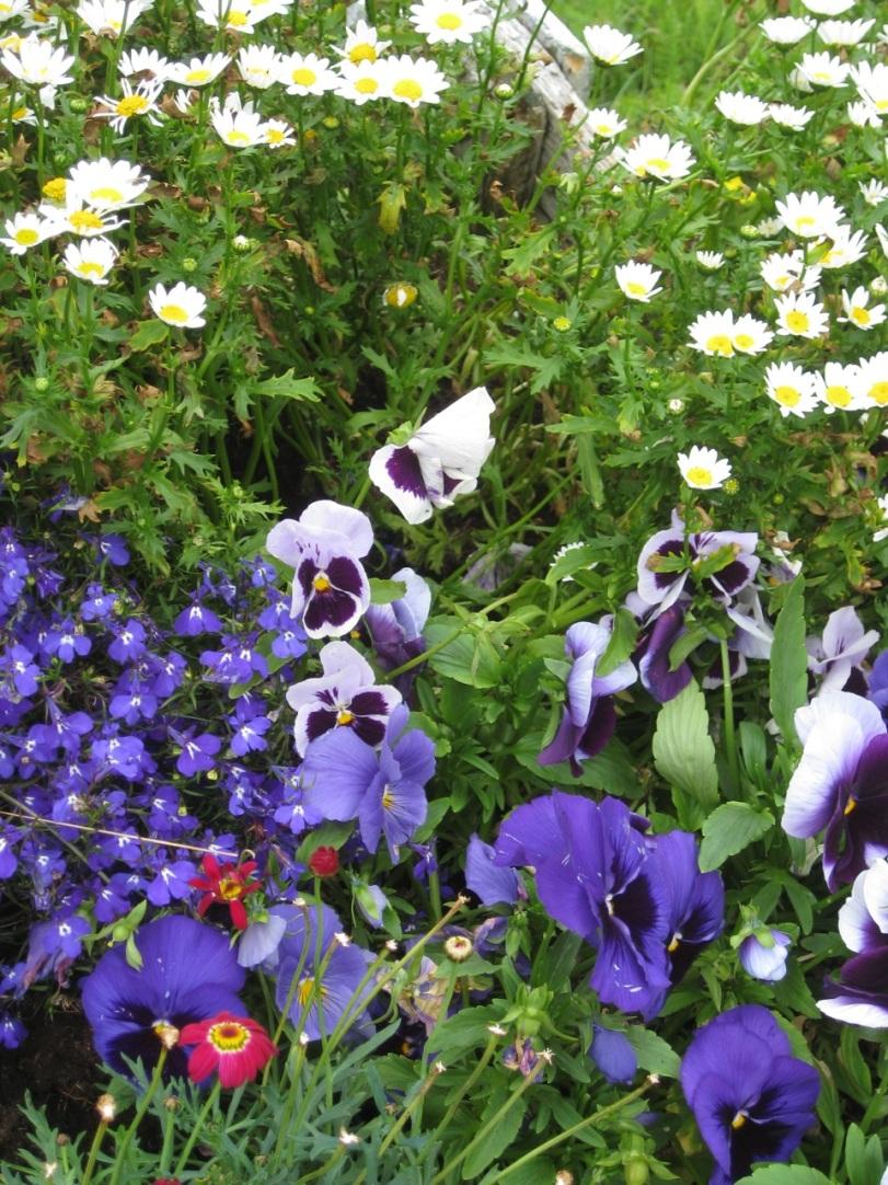 Blomster i trillebåra