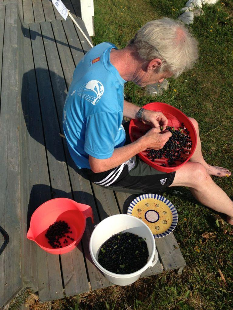 Renser blåbær