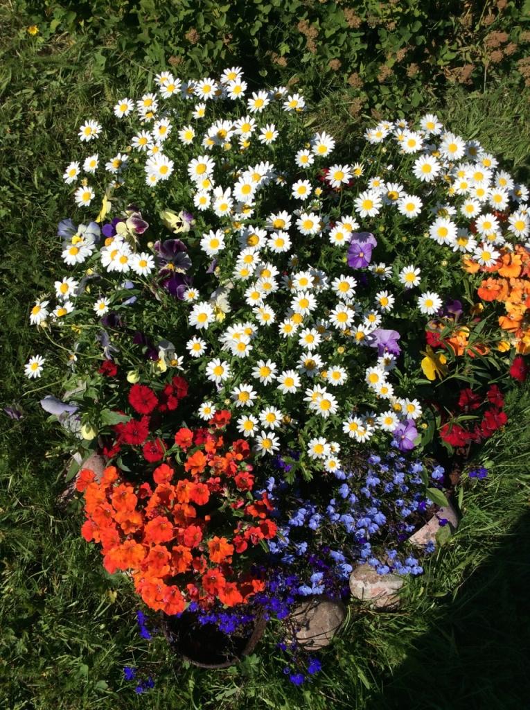 Blomstrer i gammel gryte